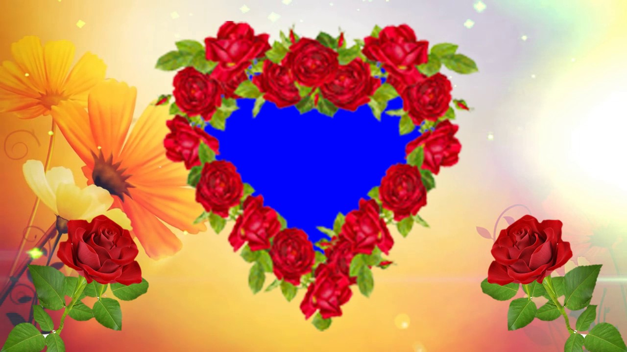 Heart Shape Red Rose Blue Background Wedding Frame - YouTube