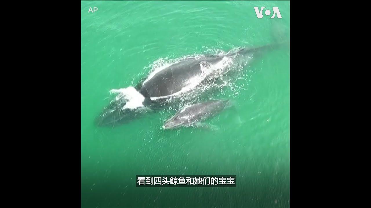 游客在哥斯达黎加国家公园观看座头鲸迁徙