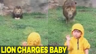 lion tries to eat child at japan zoo