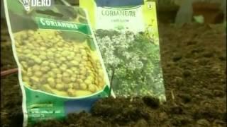 Ticho,už to roste   28 Oprava květináčů, pittosporum, lečo, sekačka na trávu