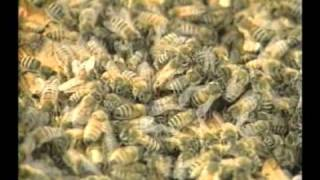 Honey Bees and Beekeeping 7.1: Overwintering hives