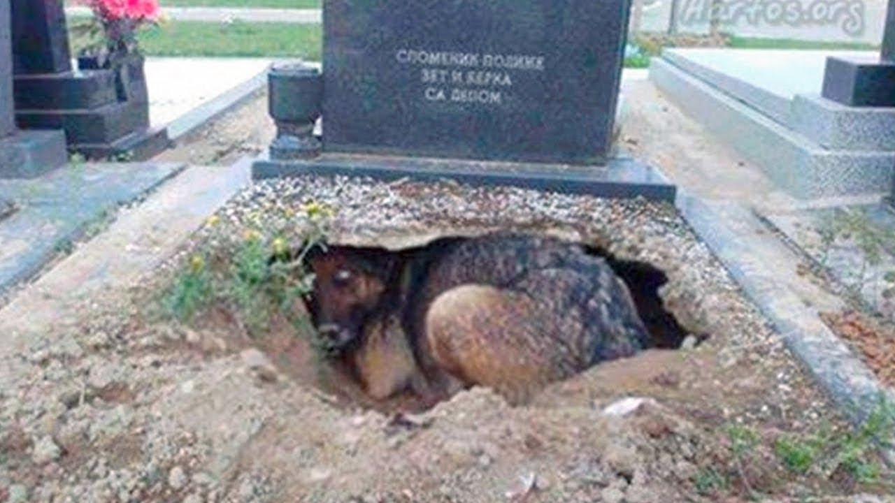 10 Most Loyal Dogs In The World