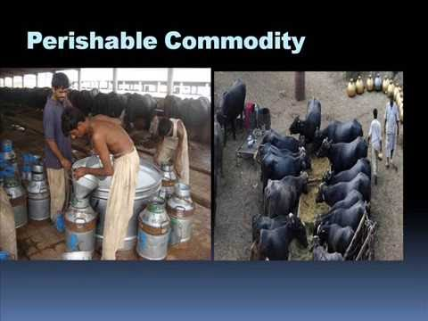Pakistan ka sub sy barha dairy farm Dr Ashraf Sahibzada