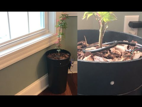 DIY Motion Detect Sentry Vacation Alarm Hidden Inside Self Watering WiFi Pot with Remote Monitoring