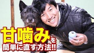 本日は犬の甘噛みの原因と直し方についてお話します! 甘噛みに関する質...