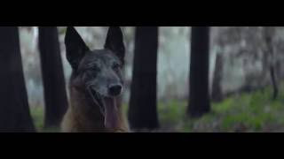 """Социальный ролик """"Собачья верность"""""""