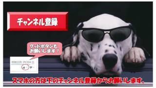 飛龍つかさ 花組 ミーアンドマイガール入り 2016年5月29日 プチッとジェ...