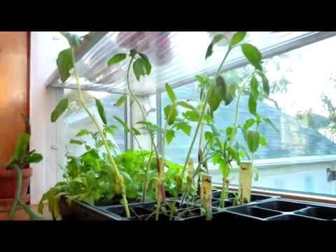 Garden Window in Allen