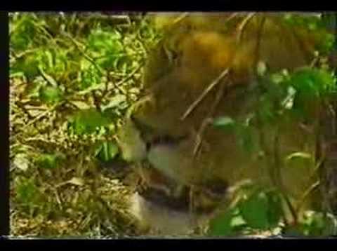 National Parks of Kenya - Kenya Tourism