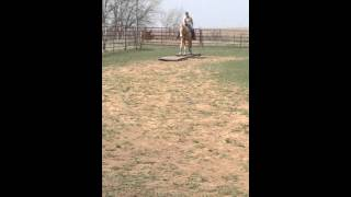 Sweet Western Dream - AQHA/PHBA 10yo Gelding For Sale