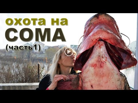 Spearfishing On The Dnieper Giant Cat Fish - охота на Днепре - UKRAINE Fishing