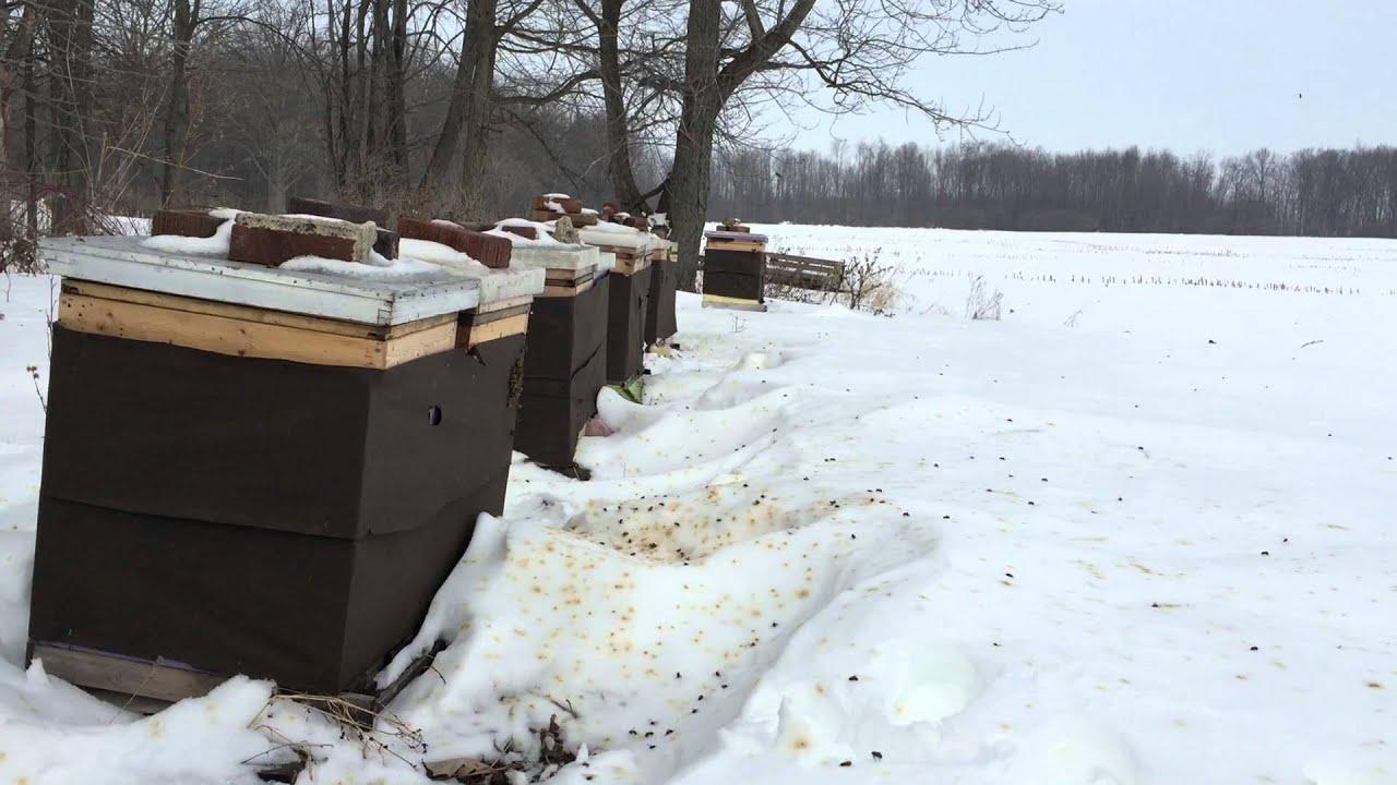 What Bees Do in the Winter   Hudsonville Honey