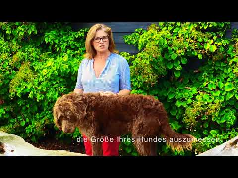 Wie Sie Ihren Hund richtig ausmessen, damit Sie die richtige Größe für Ihren Wetdog finden