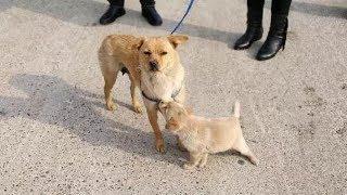 收養一隻小流浪狗,三天後狗媽媽找上門了,母子相見讓人心酸
