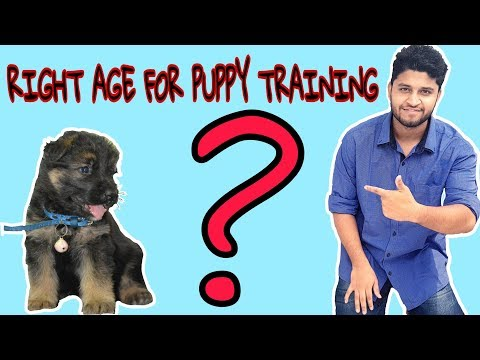 Right Age To Start Dog Training | kab dog training start karein?