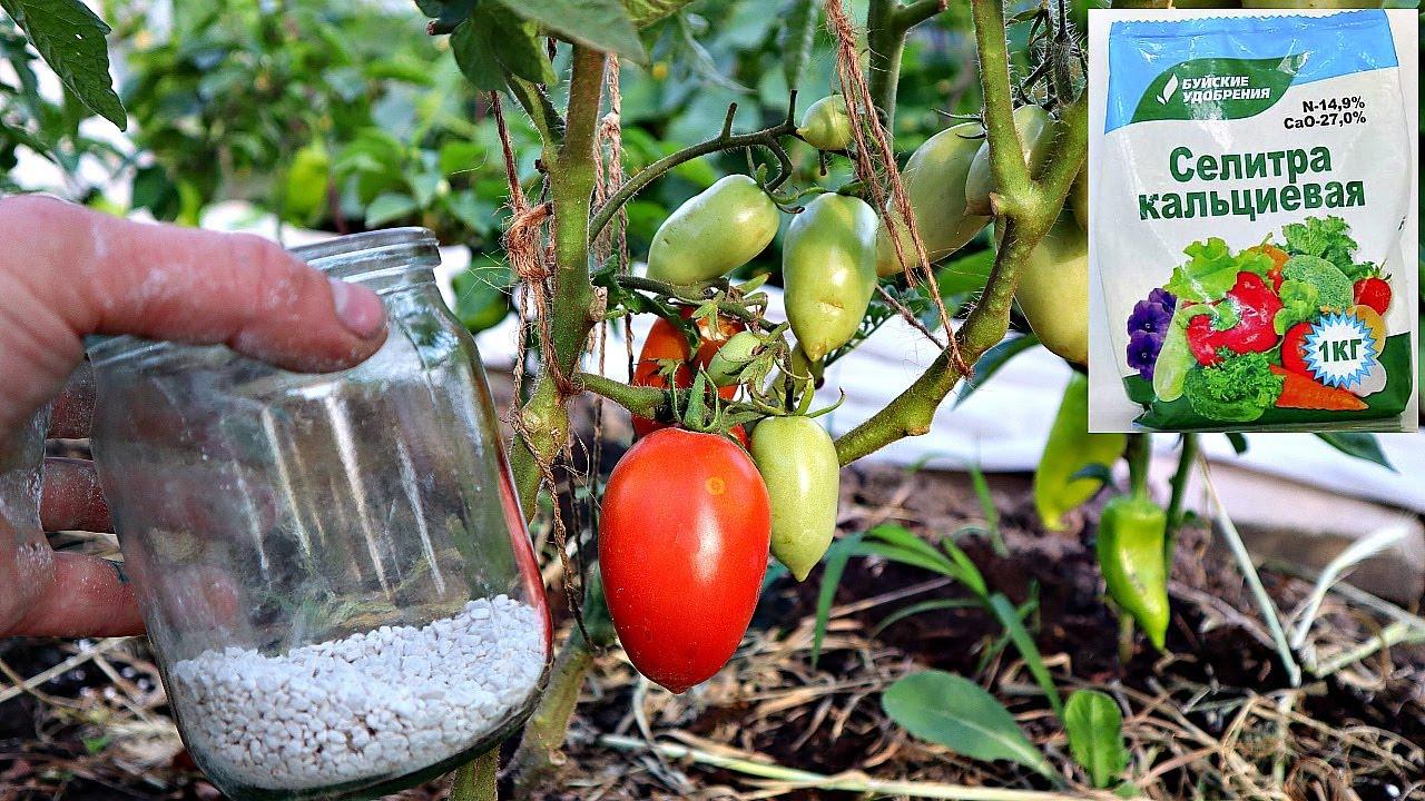 Кальциевая селитра супер удобрение для огромного урожая овощей ягод и фруктов! Кальциевая селитра