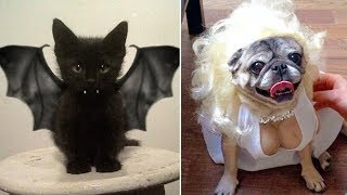 Most Creative Halloween Costumes for Pets