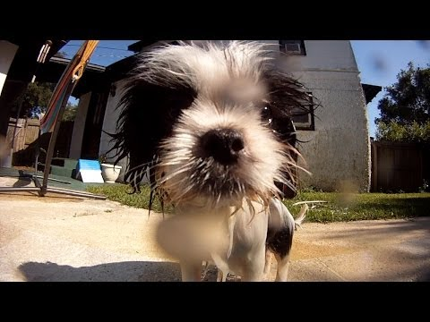 Puppy's First Time In The Pool!!! (5.6.14)