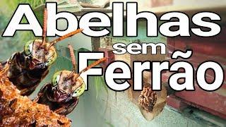 Gambar cover Abelhas Sem Ferrão: a melhor terapia.