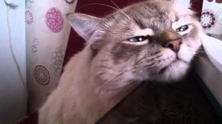 Невский маскарадный кот МАРСЕЛЬ