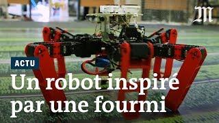 AntBot, un robot inspiré par des fourmis du désert