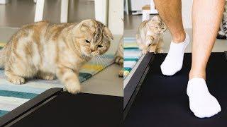 새로 산 런닝머신에 화가난 고양이