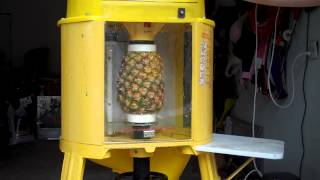 Del Monte Automatic Pineapple Peeler Corer Machine