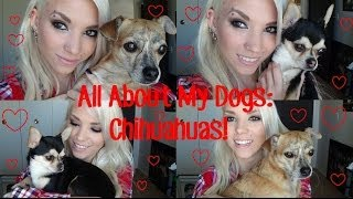 All About My Dogs: Chihuahua's.❤