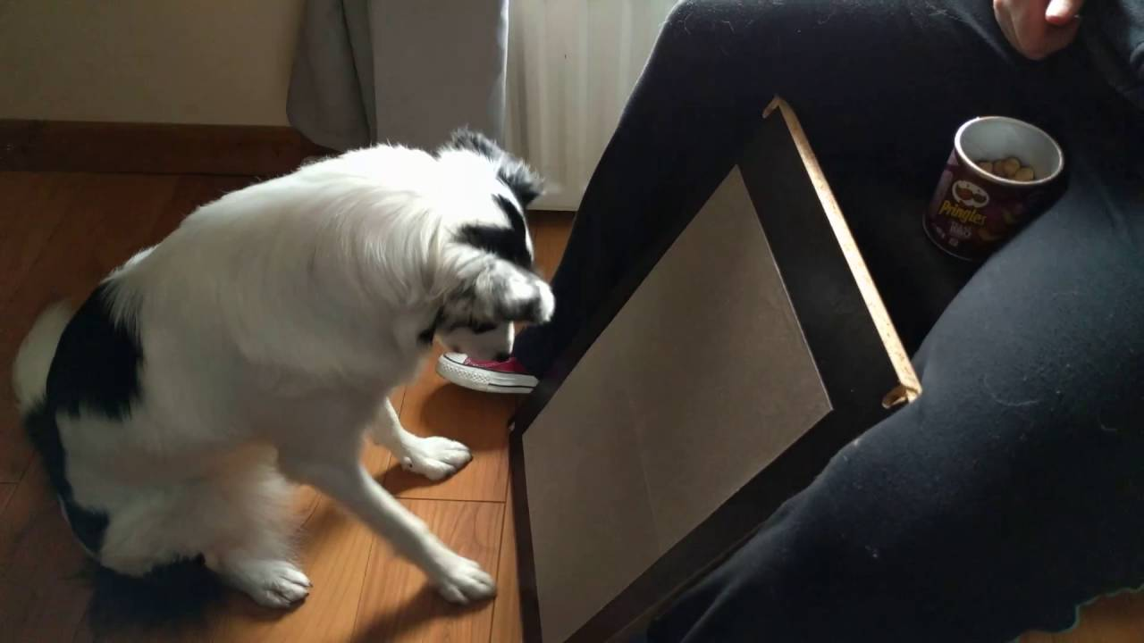 Diy dog nail scratch filing board youtube diy dog nail scratch filing board solutioingenieria Image collections