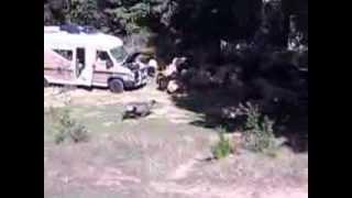 Camping chez les chèvres à Corte !