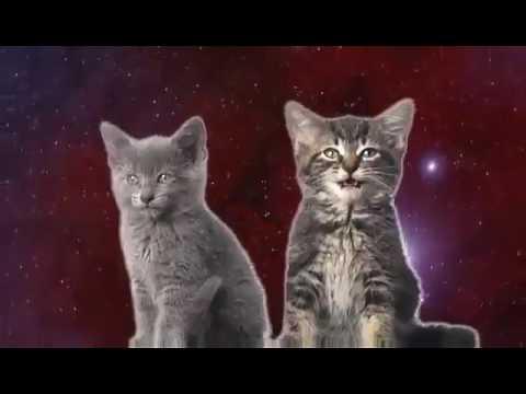 Katten die zo  leuk zingen