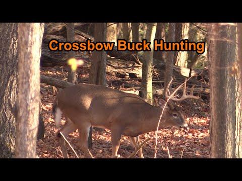 Big NY Buck vs Crossbow