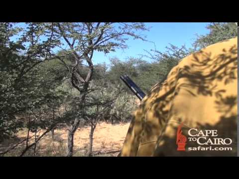 Lion Hunting With Cape To Cairo Safaris 1