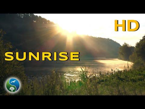 Восход солнца!! Утро на реке с Туманом и Пением птиц ~ Звуки Природы для релакса и медитации  🎶
