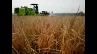 KARTAR AGRO- AXIAL FLOW Combine harvester for wet fields...