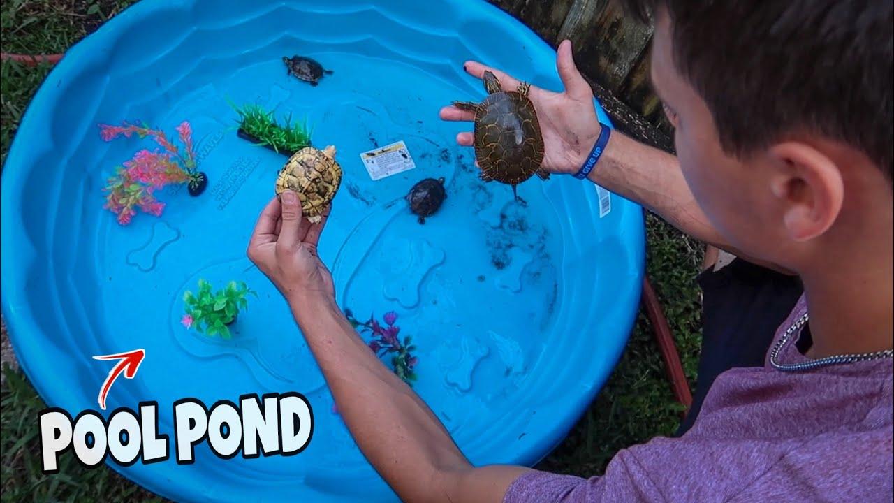 my-mini-backyard-turtle-playground