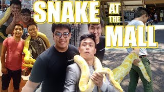 SNAKE AT THE MALL