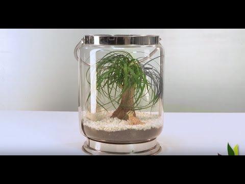 diy d co fabriquer un terrarium beaucarn a jardinerie truffaut tv youtube. Black Bedroom Furniture Sets. Home Design Ideas