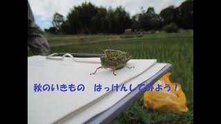バーチャル里山はっけん隊!第1部〜秋の生きものはっけん!〜