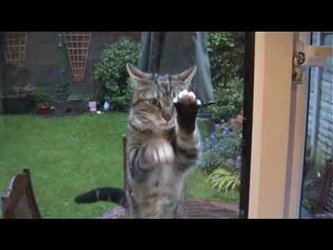 Funny Cat Cleaning window - YouTube Funny Cat Videos Clean