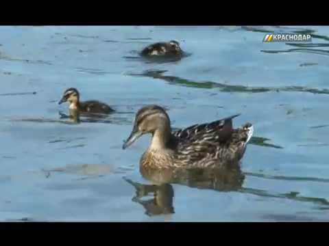 «Экскурсионный Краснодар». Река Кубань