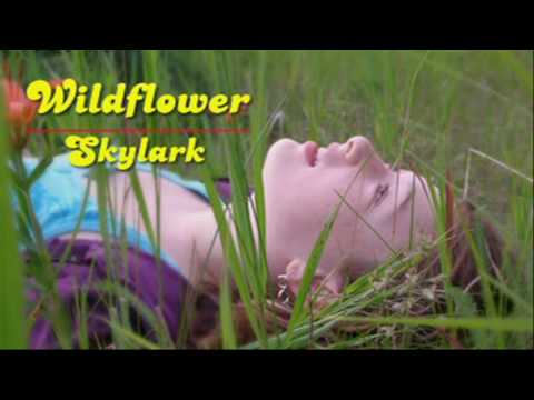 Wildflower - Skylark  [HD]