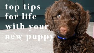 TOP TIPS FOR YOUR NEW PUPPY | FIRST WEEK WITH YOUR NEW PUPPY