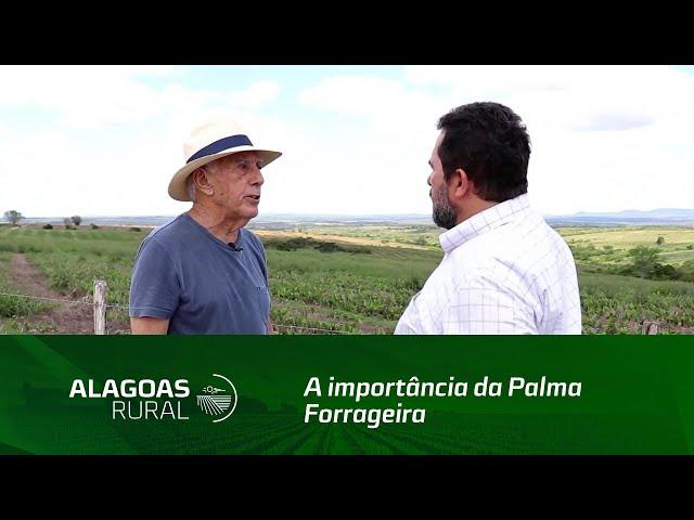 Produtor do sertão fala sobre a importância da palma forrageira