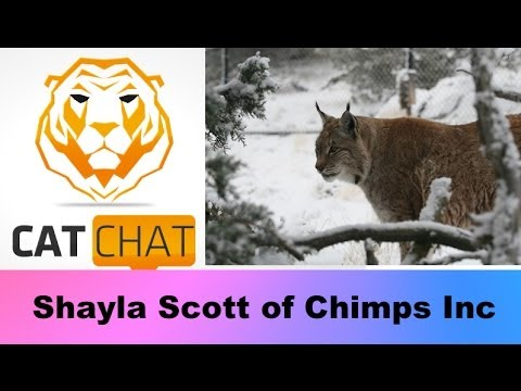 cat-chat-show-33