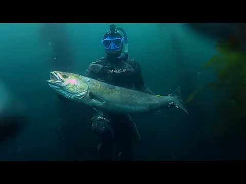 Spearfishing Southern California 2019 - Kelp Chronicles - Part 4: White Sea Bass Odyssey