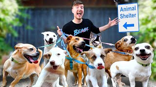 Download lagu I Adopted EVERY Dog In A Dog Shelter