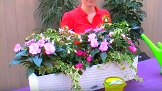 Blumenkasten Bepflanzen Pflanzen Fur Einen Sonnigen Standort