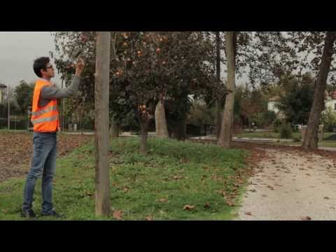 Utility Pole Testing With The CXI PT5500 Pole Tester
