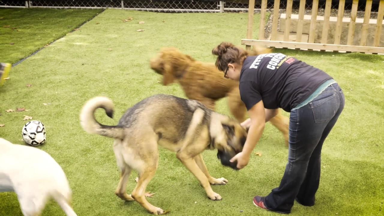 Pittsburgh Pet Concierge: Pittsburgh's Premiere Pet Resort